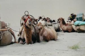 My companions in the Taklamakan Desert