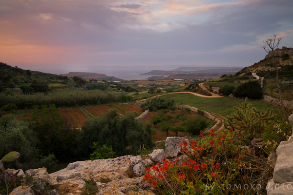 Views of the sea, and Gozo in the distance, from the terrace of Mark's farm...