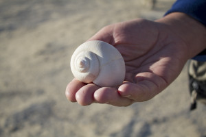 Much of the area was once beneath the waters of prehistoric Lake Megachad - I found this fossil shell near one of our camps…