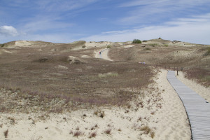 """A wooden path protects the incredibly fragile balance of the Grey or """"Dead"""" Dunes..."""