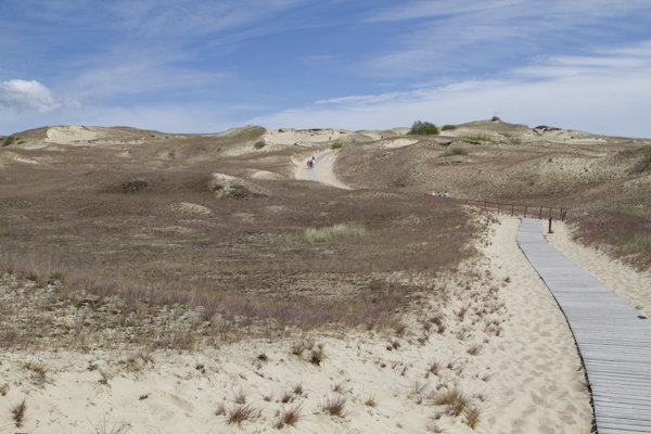 "A wooden path protects the incredibly fragile balance of the Grey or ""Dead"" Dunes..."
