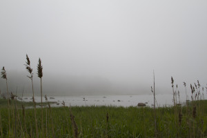 A thick sea fog swallowed the coast...