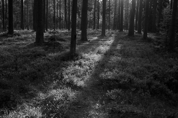 Lahemaa's magical mist-shrouded forests are just a short drive away from Tallinn...