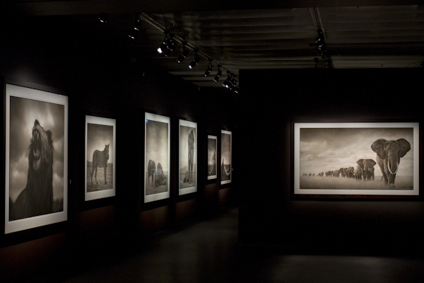 An incredible exhibit on wildlife photography — apparently shot close up, without a telephoto lens!