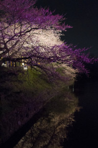 Branches heavy with delicate petals hung over the moat...