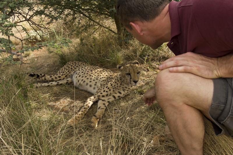 Petting a cheetah beats watching TV...